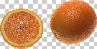 Blood Orange Tangerine Tangelo Clementine PNG