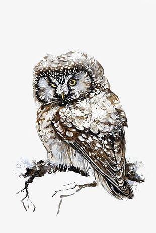 Snow Owl PNG