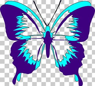 Butterfly Violet Purple PNG