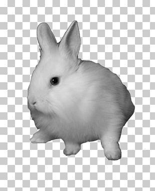 Domestic Rabbit Snowshoe Hare PNG