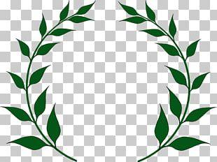 Laurel Wreath Bay Laurel Olive Wreath Leaf PNG