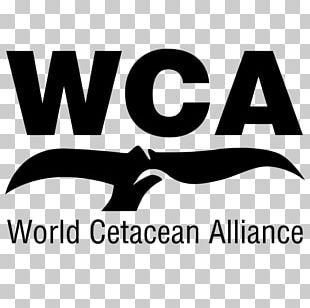 Whale Conservation Cetaceans World Cetacean Alliance Whale Watching Porpoise PNG