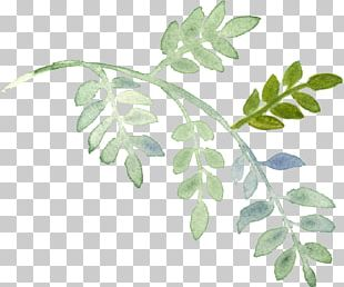 Plant Watercolor Painting PNG