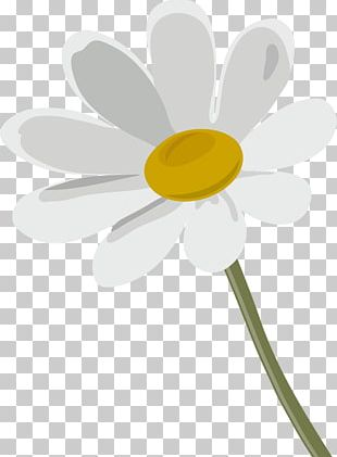 Oxeye Daisy German Chamomile Flower PNG
