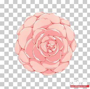 Garden Roses Cabbage Rose Flower Petal Pink M PNG