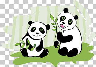 Giant Panda Cartoon Drawing Illustration PNG
