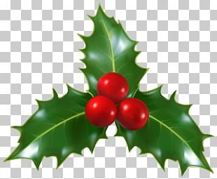Mistletoe Christmas Common Holly PNG