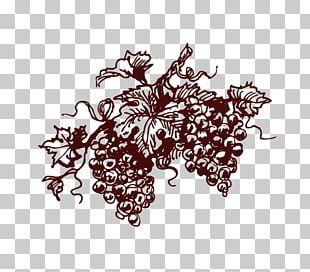 Red Wine Champagne Common Grape Vine Cava DO PNG