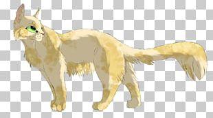 Cat Red Fox Mammal Carnivora Animal PNG