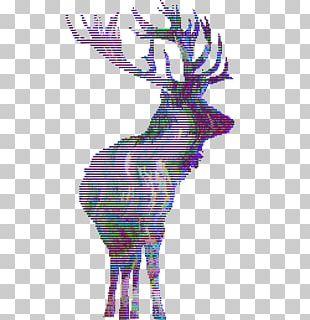 Elk Red Deer Moose Roe Deer PNG