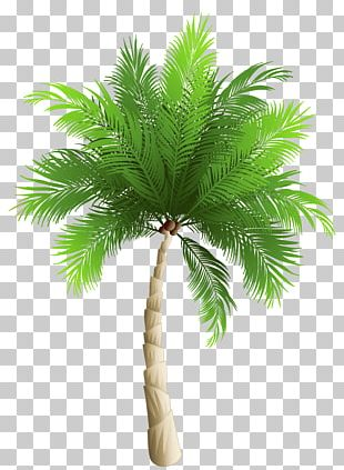 Palm Trees Date Palm Phoenix Canariensis Coconut PNG