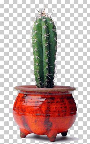 Cactaceae Succulent Plant Schlumbergera PNG