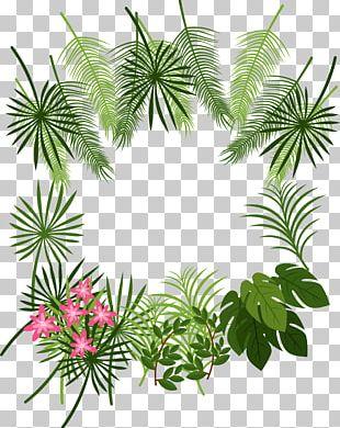 Arecaceae Leaf Tropics Plant PNG