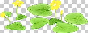 Leaf Nelumbo Nucifera Illustration PNG