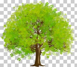 Tree Green PNG