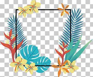 Tropics Geometry Quadrilateral PNG