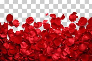 Petal Garden Roses Flower Red PNG