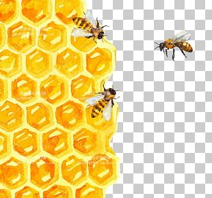 Bee Honeycomb Watercolor Painting Illustration PNG