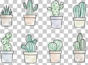 Cactaceae Drawing Painting PNG