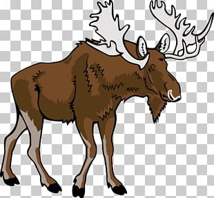 Moose Free Content PNG
