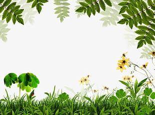 Spring Green Background Border PNG