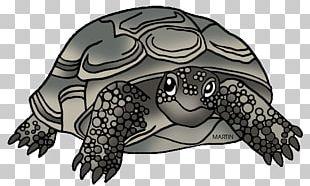 Georgia Box Turtle Gopher Tortoise Reptile PNG