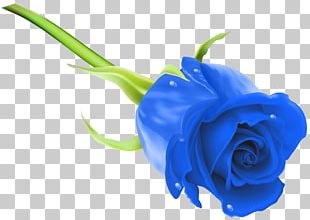 Blue Rose Flower Stock Photography PNG