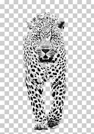 Leopard Jaguar Lion Tiger Black Panther PNG