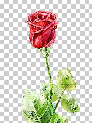 Garden Roses Centifolia Roses Floral Design Vase Cut Flowers PNG