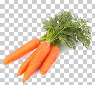 Carrot Vegetable Computer File PNG