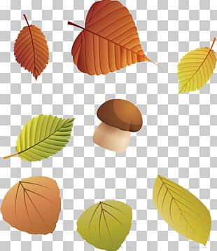 Autumn Leaf Color Autumn Leaf Color Deciduous PNG