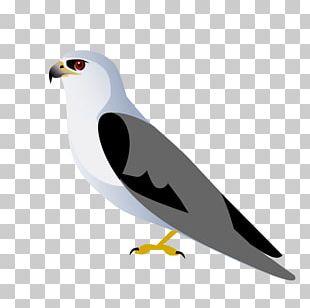Eagle Fauna Seabird Beak Feather PNG