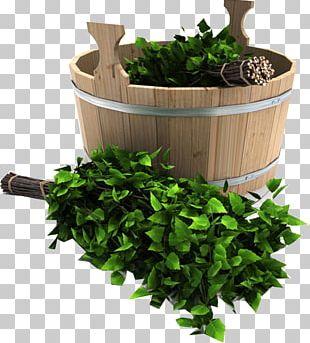 Banya Banny Venik Sauna Oak Birch PNG