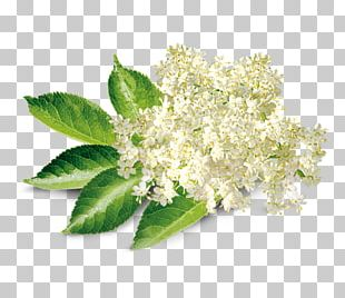 Elderflower Cordial Elderberry Shrub Lemon Syrup PNG