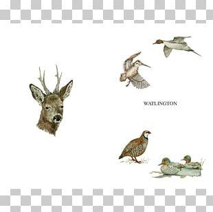 Beak Bird Of Prey Fauna Wildlife PNG
