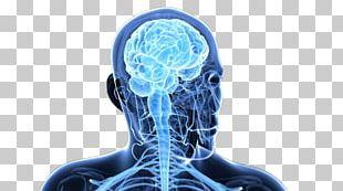 Brain Homo Sapiens Central Nervous System Nerve PNG