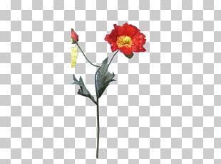 Rose Family Cut Flowers Bud Plant Stem PNG
