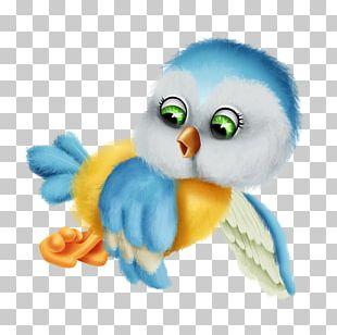 Owl Flightless Bird Beak Feather PNG