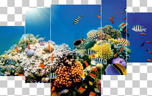 Coral Reef Desktop Underwater Sea Ocean PNG