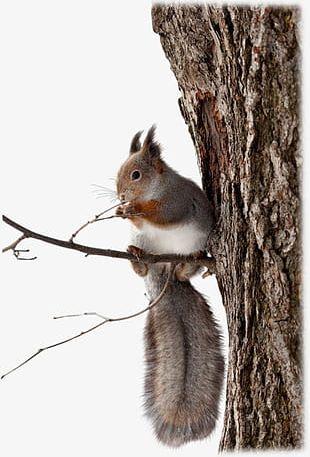 Cute Squirrel PNG