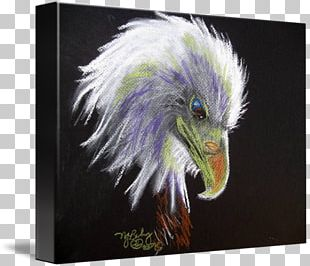 Bald Eagle Gallery Wrap Beak Canvas Art PNG