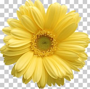Flower Yellow Stock Photography PNG