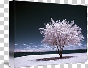 Infrared Photography Art Digital Photography PNG
