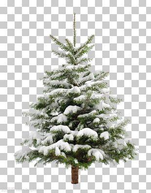 Christmas Tree Snow Fir Pine PNG