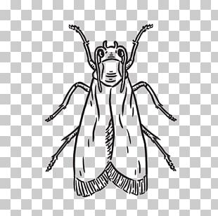 Insect Line Art Cartoon Sketch PNG