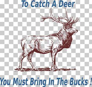 Elk Deer Drawing Pronghorn PNG