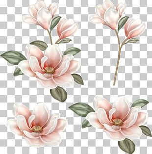 Flower Magnolia PNG