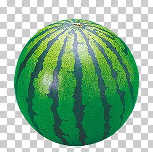 Watermelon Citrullus Lanatus PNG