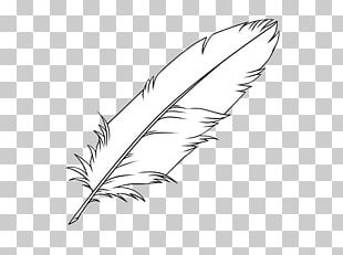 Feather Drawing Coloring Book Bird PNG