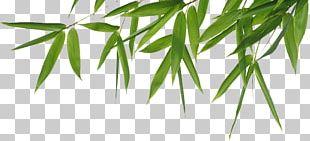 Bamboo Header PNG